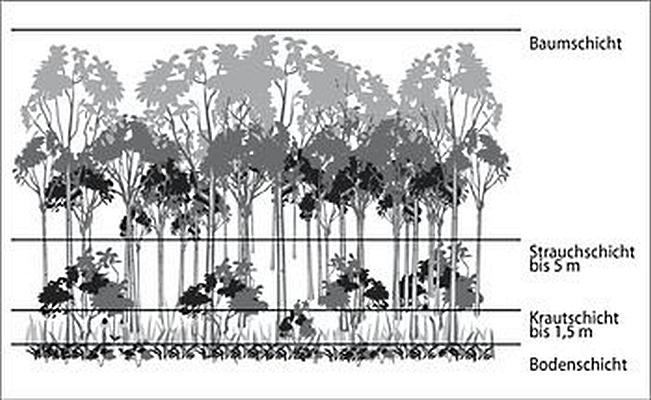 Schattenblick Pflanzen 027 Wald Erzahlt Mutwillig Daneben Sb