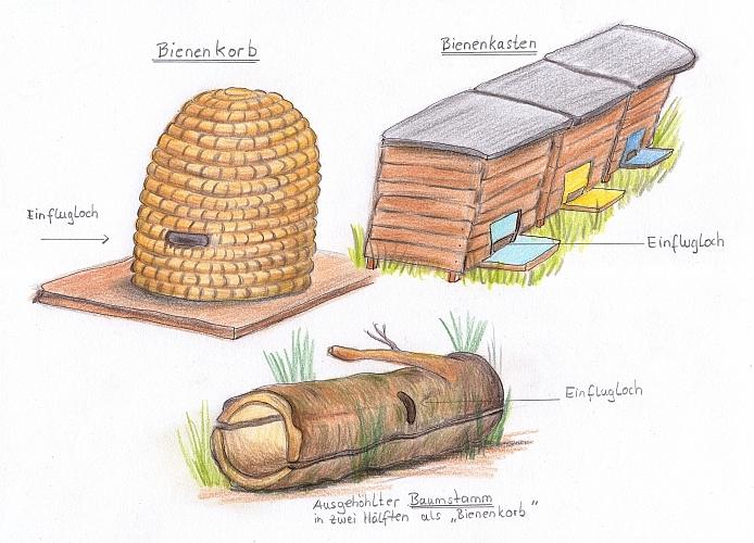 schattenblick tiere 079 bauk nstler und experten im zusammenleben die honigbienen sb. Black Bedroom Furniture Sets. Home Design Ideas